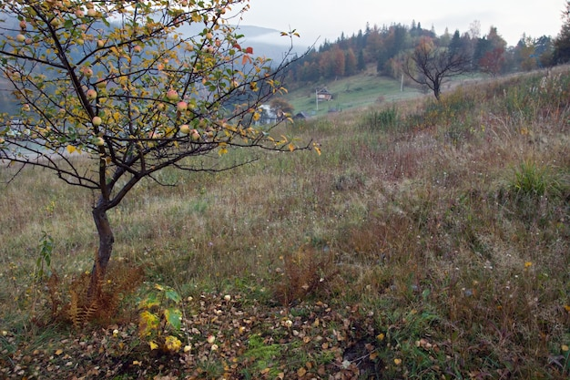 Осенний вид на горы с яблоней впереди