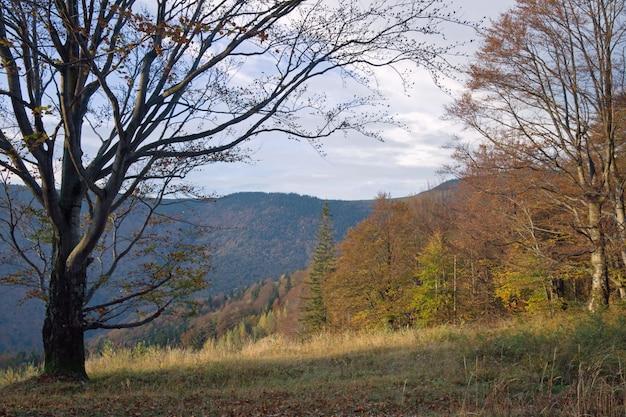Осенний вид на горы с большим голым деревом впереди
