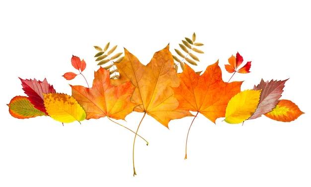 フレームボーダーの秋の色とりどりの葉