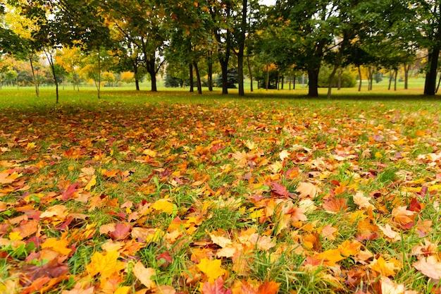 秋。色とりどりのカエデの葉が草の上に横たわっています。