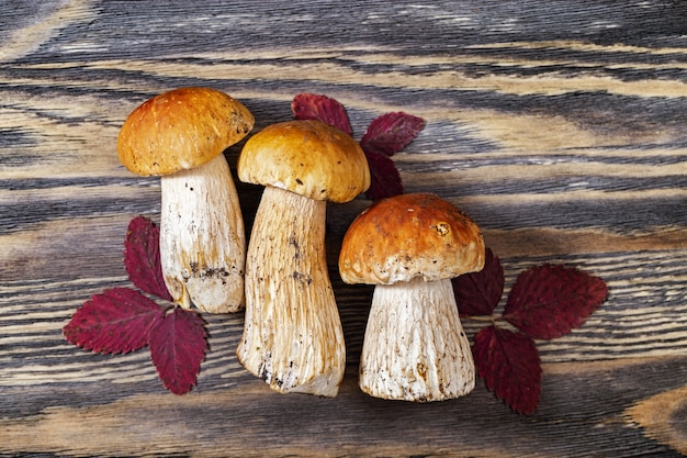 Autumn mushrooms with autumnal red leaves