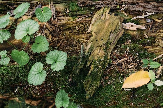 Осенняя мистическая атмосфера в старом лесу фантазийный фон со мхом