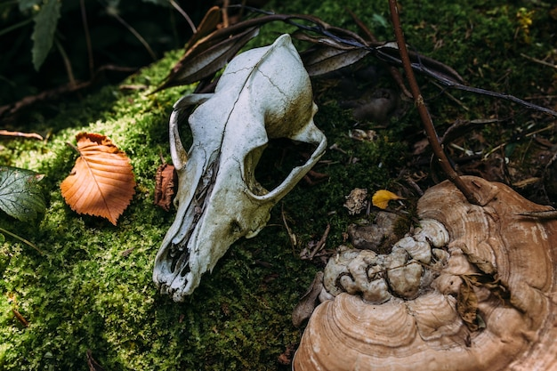 Autumn mystical atmosphere in an old forest dog scull in fantasy background