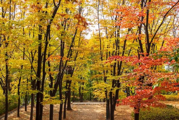 Autumn of namsan tower in seoul,south korea
