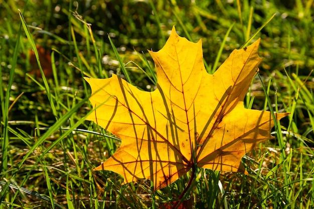 가을 자연 배경. 푸른 잔디에 노란 단풍 잎입니다. 가을의 외로움.