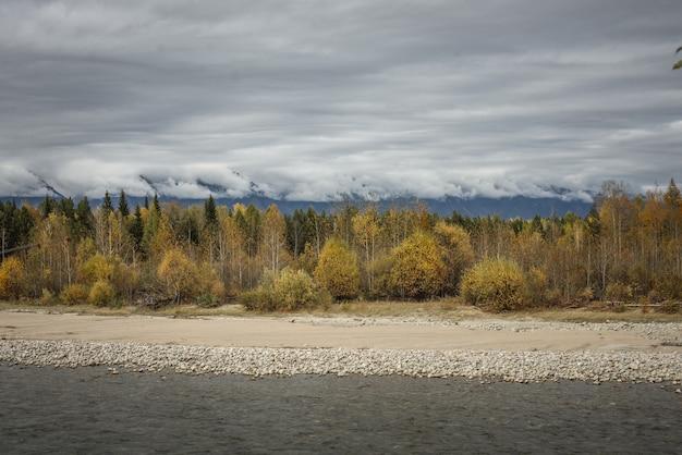 가 자연 풍경입니다. 돌이 많은 해안이 있는 빠른 강, 노란 나무와 흐린 하늘이 있는 숲
