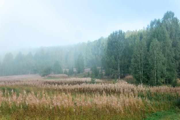 朝の霧の中で色あせたヤナギランと秋の自然の野生の風景