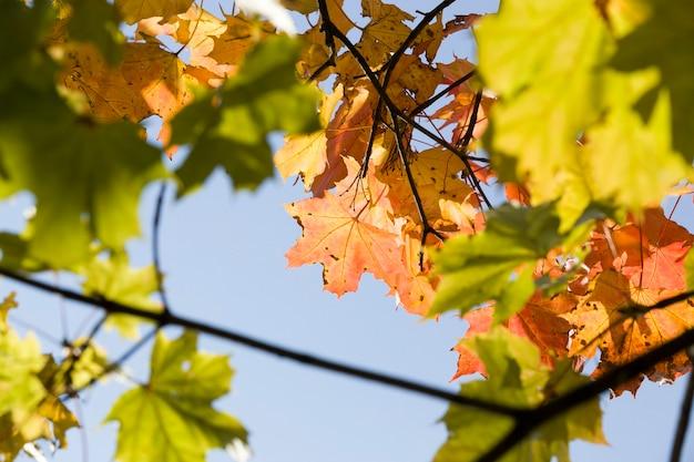 Autumn nature in early autumn