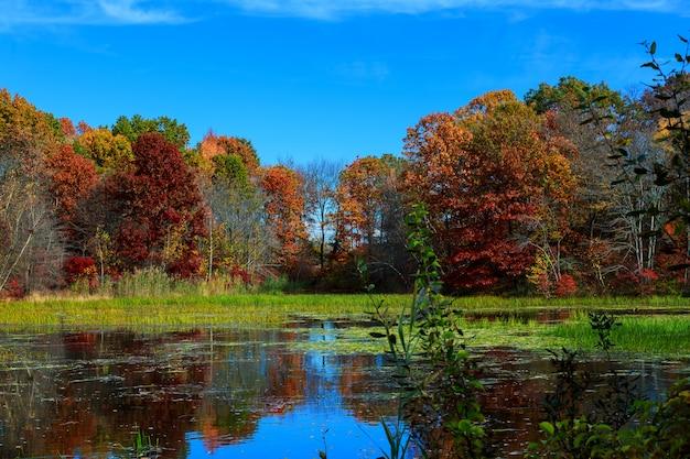 Осенняя природа, пейзаж с березами на берегу лесного озера.