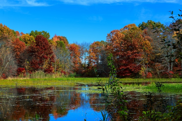 Autumn nature, landscape with birches on shore of forest lake.