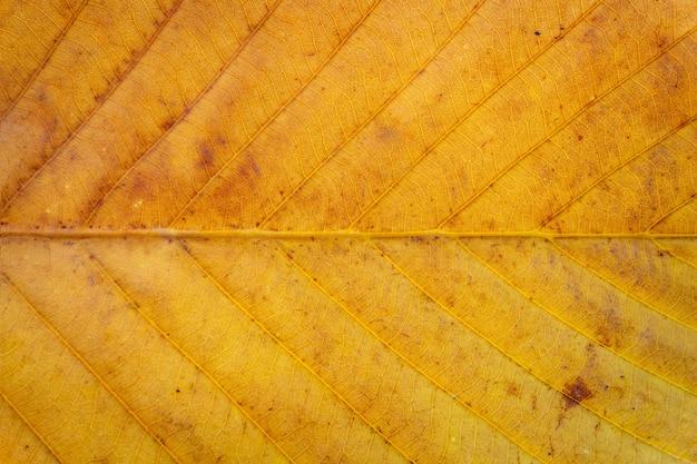Осенняя природа листовой текстуры