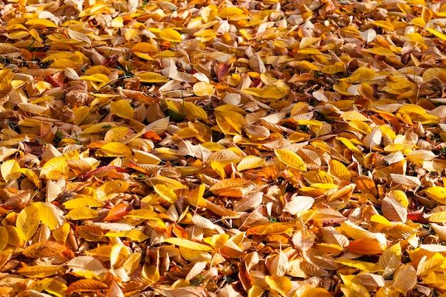Осенняя природа с разноцветными деревьями, меняющими цвет листвы в зависимости от сезона