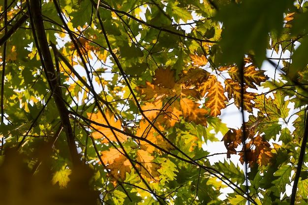 자연의 변화가있는 가을의 자연, 진짜 자연