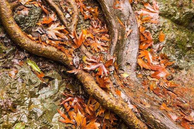 岩と葉のある秋の自然