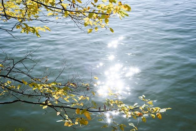 호수 위에 나뭇가지와 가을 자연