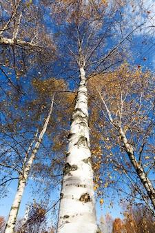 黄ばんだ葉と落ち葉の木と秋の自然
