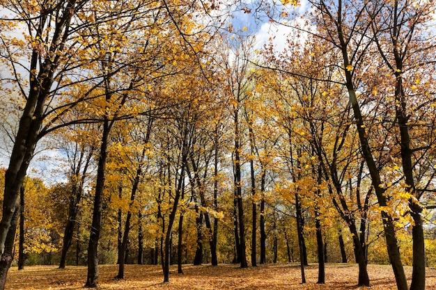 Осенняя природа с деревьями с пожелтевшими листьями и деревьями с опавшими листьями