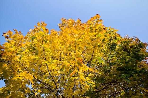Autumn nature with yellowed foliage