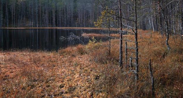 森の中の秋の北の沼地の湖