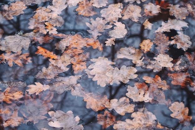 Осенние дубовые листья в воде с отражением в лесу