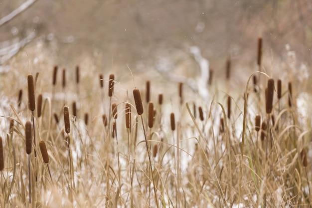 乾燥した花や草のある秋または冬の風景。