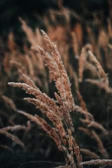 Осенний оранжевый сухой полевой цветок на размытом фоне в дикой природе сентябрьские детали природы v