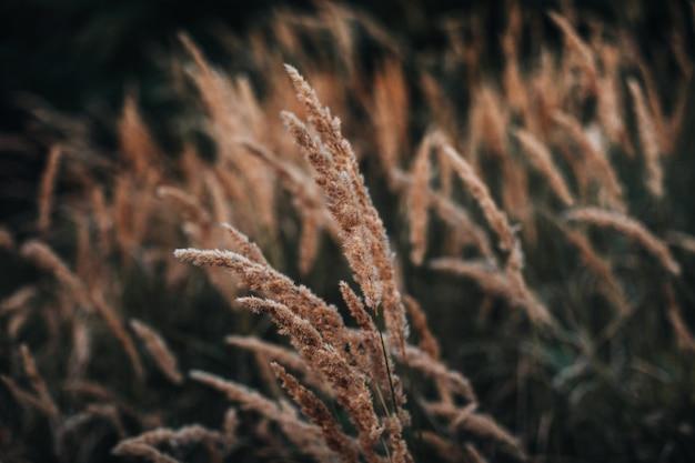 Осенний оранжевый сухой полевой цветок на размытом фоне в дикой природе. сентябрьские подробности природы.