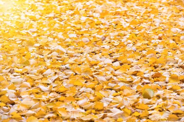 自然の背景として秋のオレンジ色の落ち葉