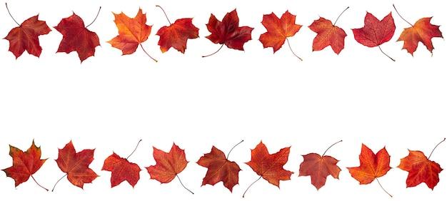 Осенние оранжевые листья падают на белом фоне