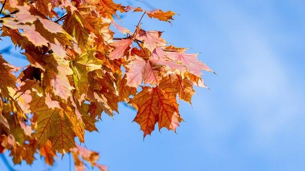 晴れた日の青空にオレンジ色の紅葉