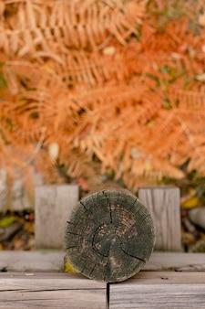 Осенние оранжевые листья