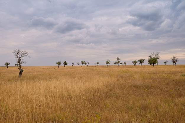 Осенняя картина на открытом воздухе травянистой равнины с несколькими деревьями на заднем плане. затуманенное небо над летним лугом перед дождем. окружающая среда, дикая природа, пейзажи, сельская местность, сезон и концепция погоды