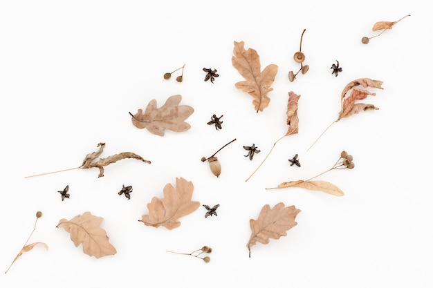 Autumn pale pattern, dry oak leaves, acorns on white