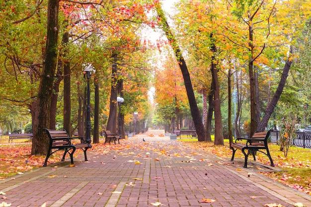 Осенняя парковая аллея и деревянные скамейки под разноцветными листьями в городе.