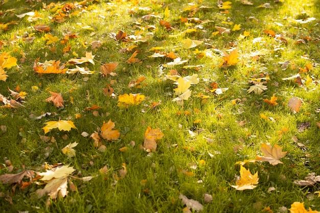 Осенний парк. концепция осеннего времени. листопад на траву.