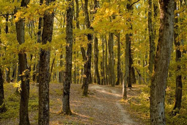 秋の公園秋のカラフルな背景の葉の葉