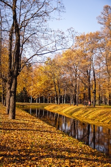 Autumn park in clear weather. golden autumn. autumn in the park. yellow foliage.