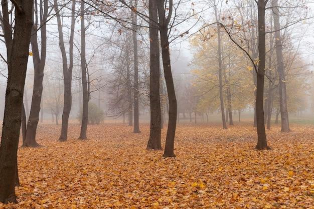 Осенний парк, холодная осенняя погода с падающими листьями, часть которых затемнена, туманное утро
