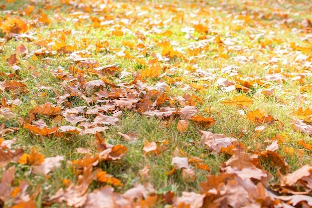 Осенний парк отдыха. концепция осеннего времени. листопад на траву.