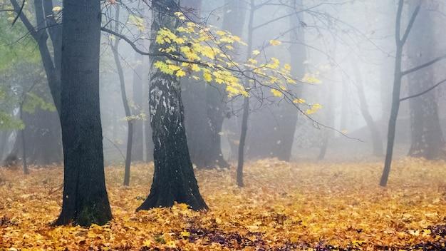 霧のかかった朝の秋の公園黄色の木々と落ち葉が地面に