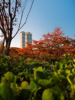 서울의 가을 공원