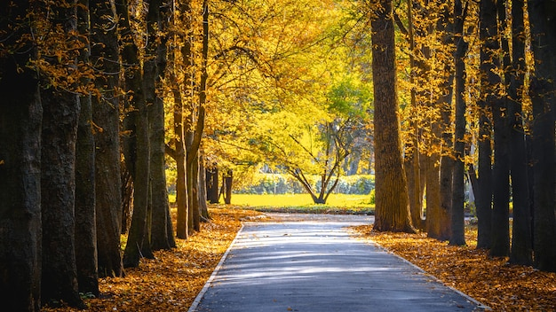 Осенний парк в солнечную погоду. желтые осенние листья в городском парке.