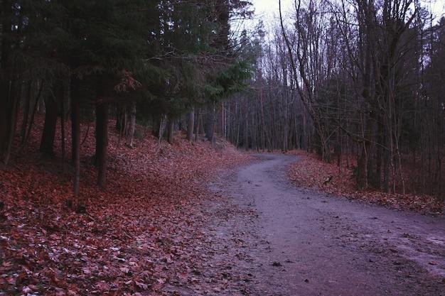 青みがかった夕暮れの早朝の秋の公園。