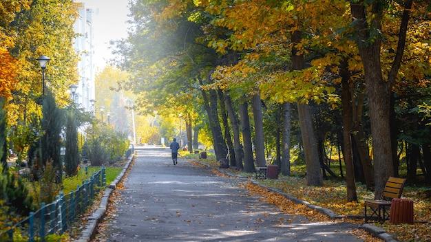 晴天の朝の秋の公園、男が公園でジョギング