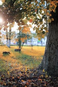 가을 공원 잎 태양