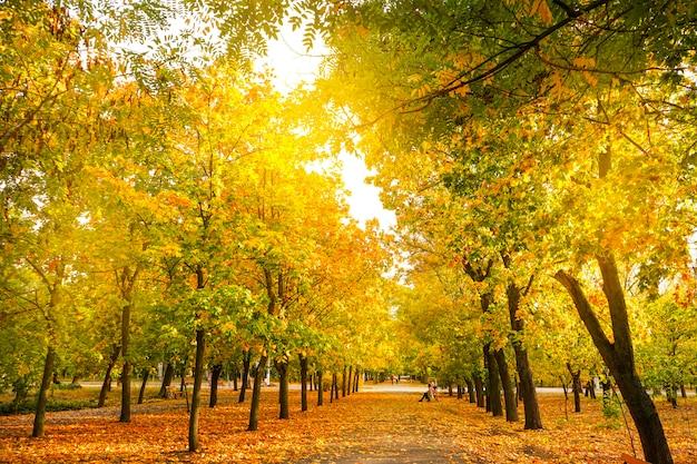 秋の公園、自然な背景