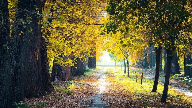 晴れた日の秋の公園。太陽光線で古い公園の路地に落ち葉