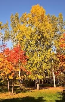 가을 공원. pervomaisky 광장에 밝은 단풍과 나무