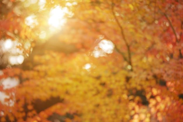 Осенний парк несфокусированный фон
