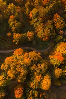 Autumn park with alley aerial drone view. colorful autumn landscape